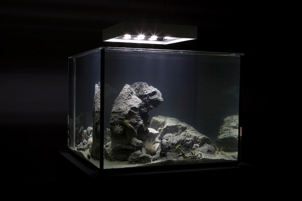 Pierre Huyghe: the moment of suspension