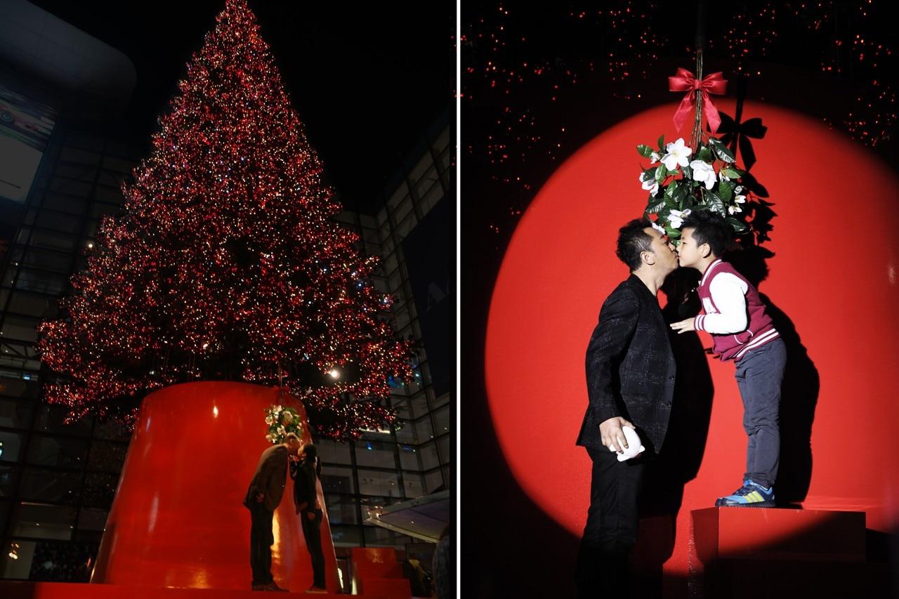 Christmas trees - Domus