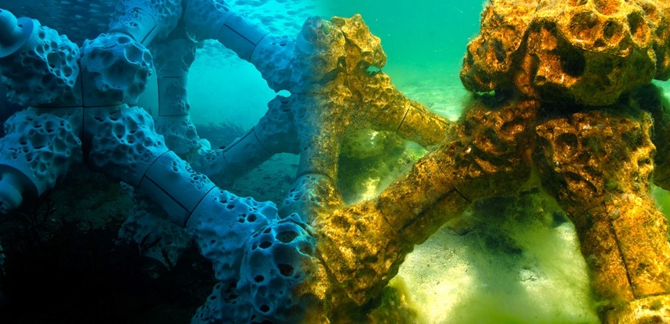 Alex Goad, Modular Artificial Reef Structure (MARS)