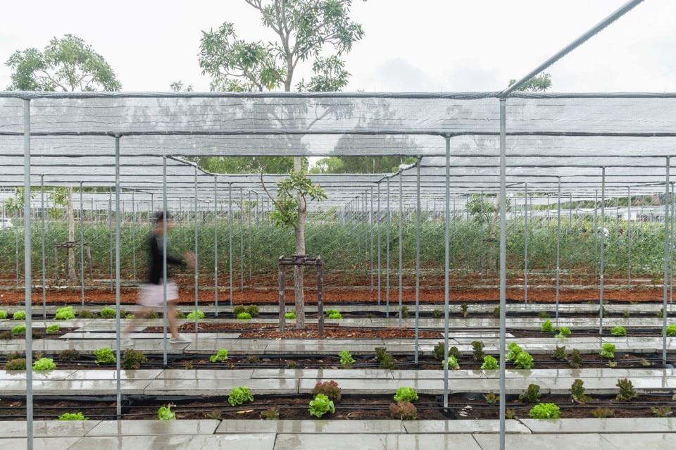 define open field farming