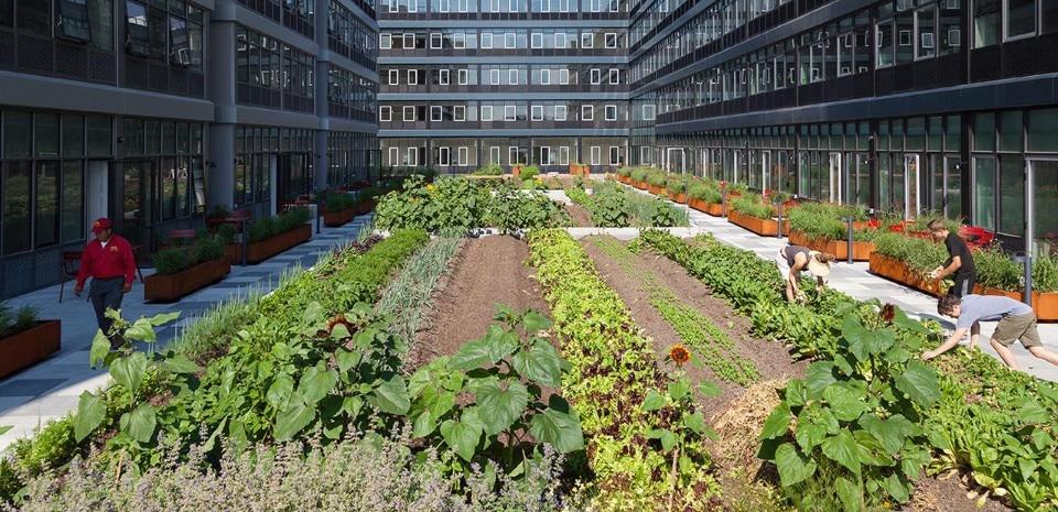 urban farm in ny domus. Black Bedroom Furniture Sets. Home Design Ideas