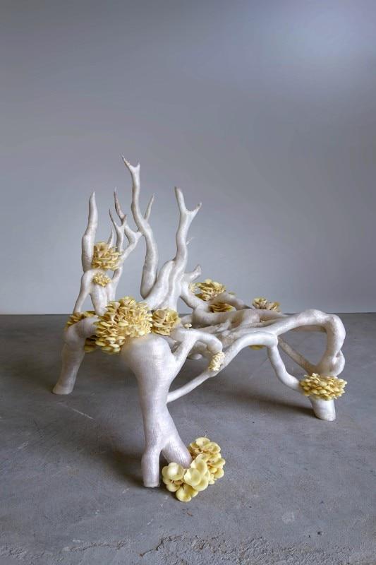 domus-mycelium-chair-la-fabrique-du-vivant