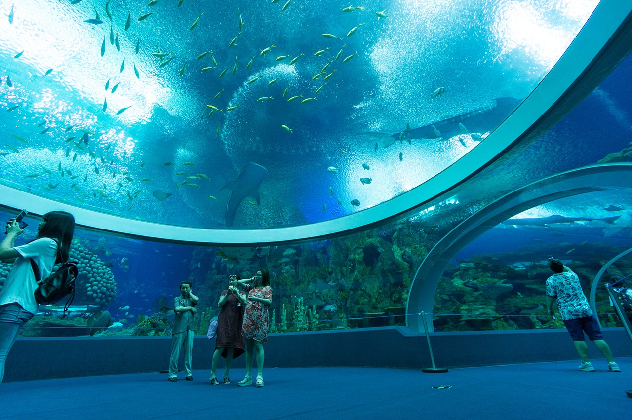 The world's largest aquarium reveals complexity and ...