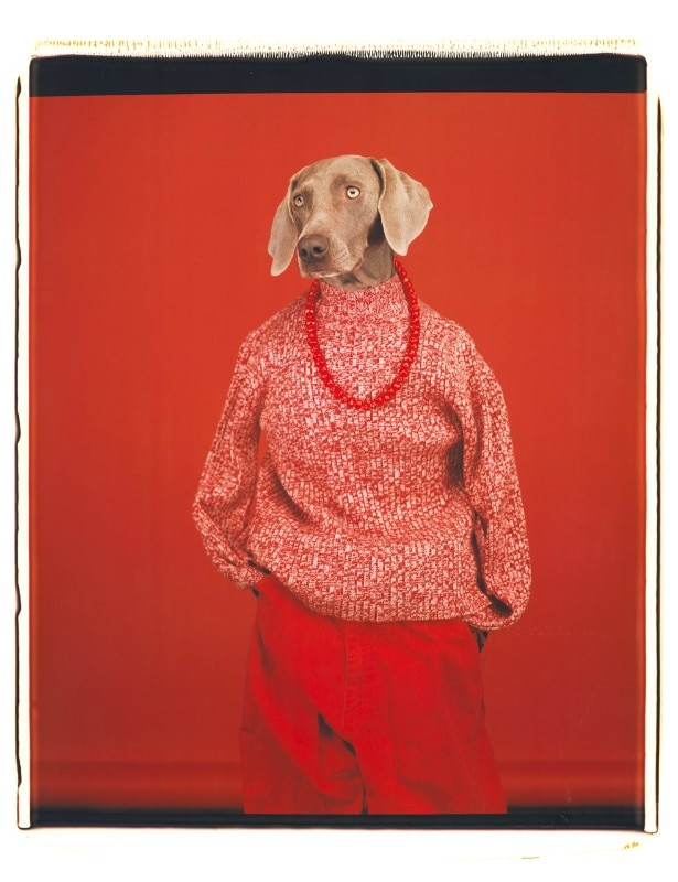 William Wegman, Tamino with the magic flute, 1996. Courtesy the artist and Sperone Westwater Gallery