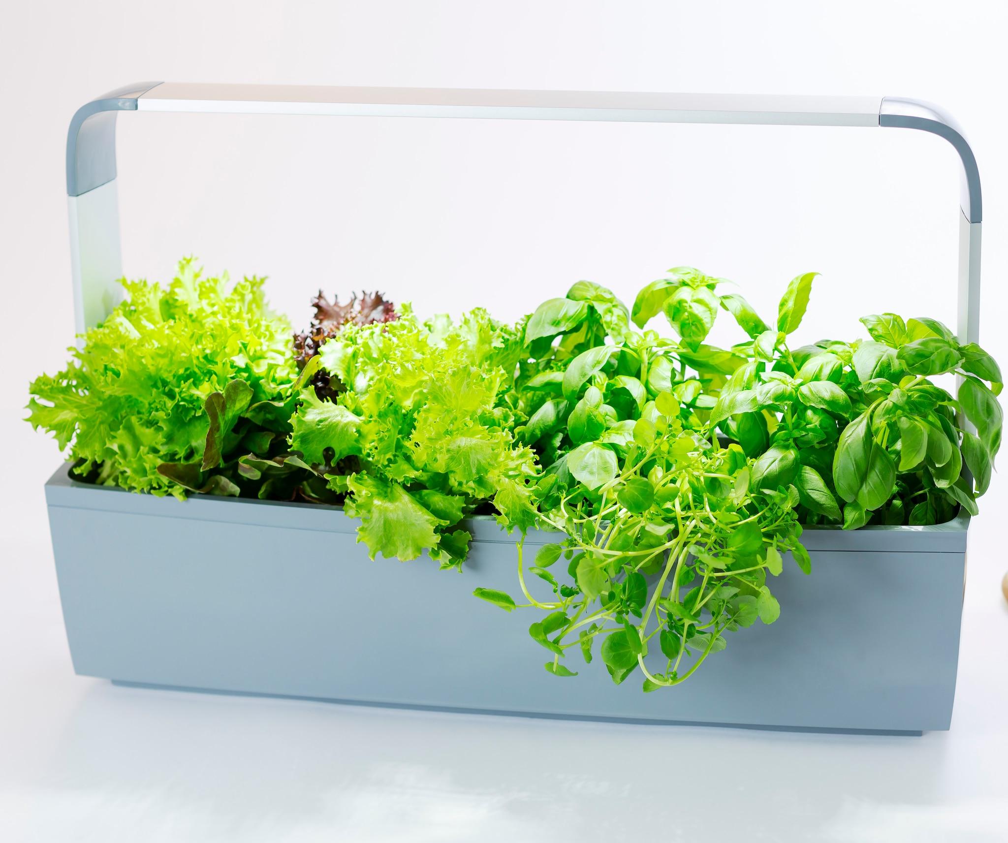 Coltivare In Casa Piante Aromatiche tegren, vasi smart per crescere verdure dentro casa