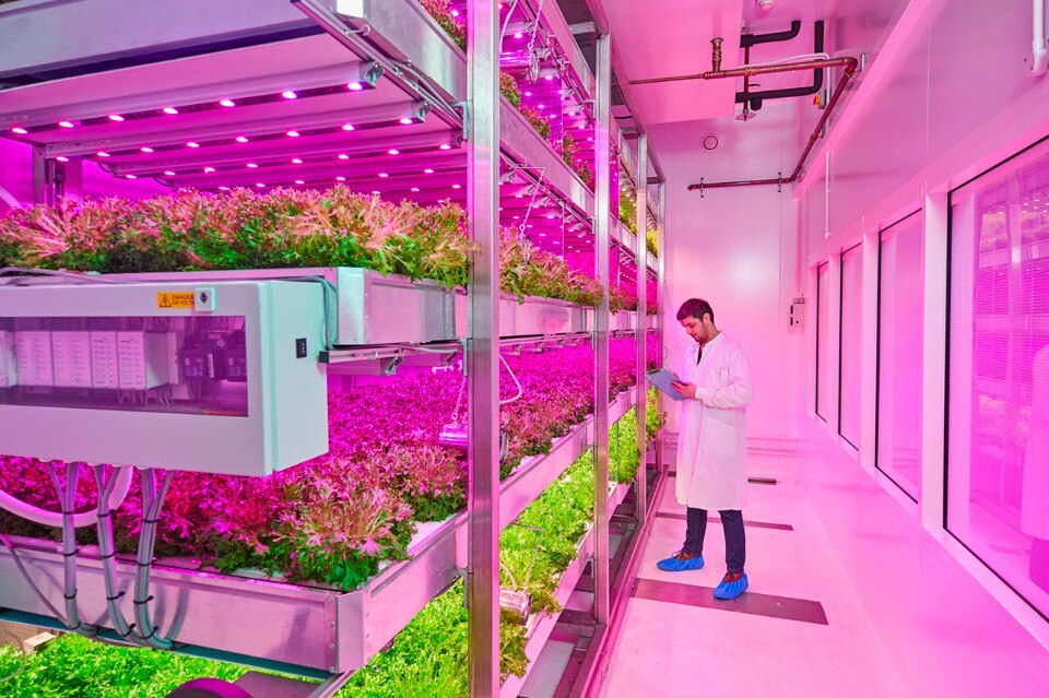 Laboratori Philips, greenhouse growing