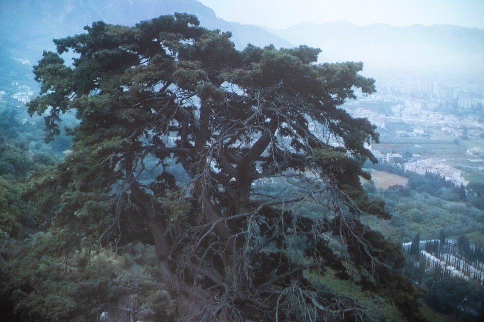 Uriel Orlow, Wishing Trees, 2018. Still from video. Photo: Leandro Lembo