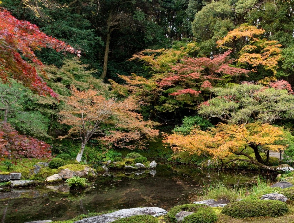 Japanese gardens told by landscape architect Tomoki Kato