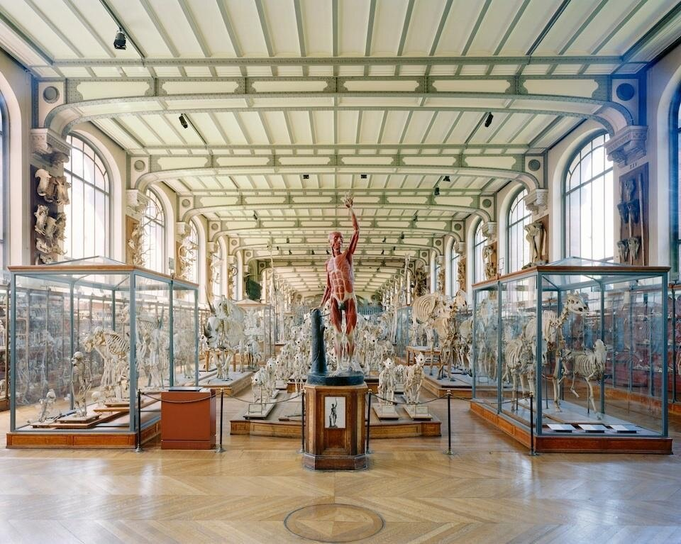 Richard Barnes, <i>Flayed Man, Museum of Contemporary Anatomy</i>, Paris, 2005. C-print, della serie <i>Animal Logic</i>, courtesy Blue Sky Gallery.