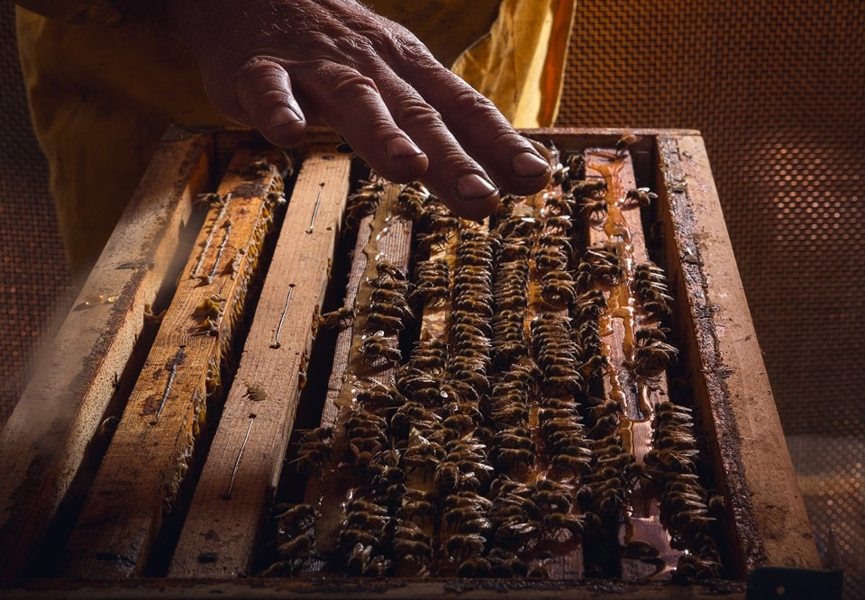 World Bee Day. 10 stories not to miss